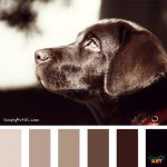 Simply Art Color Inspiration | Mans Best Friend